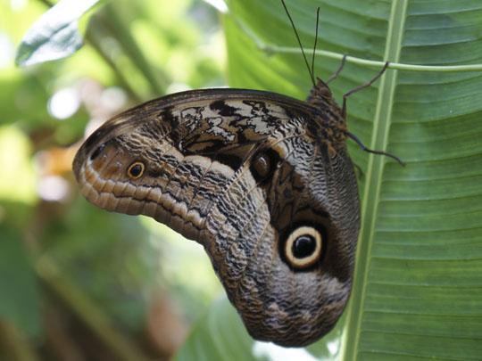 Butterfly House Machu Picchu | Best of Peru Travel