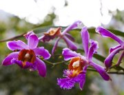 Machu Picchu Orchid Garden | Best of Peru Travel