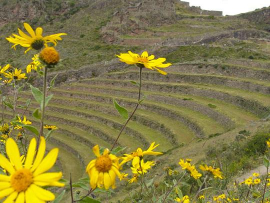 Pisac Ruins, Sacred Valley, Peru.