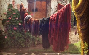 Recently dyed wool drying in the sun